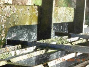Algues dans la Tour de Refroidissement