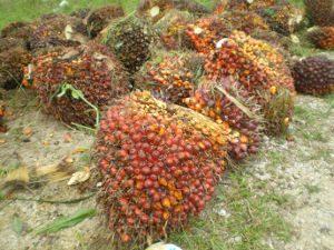 fruits à l'huile de palme